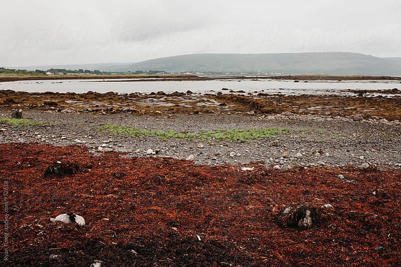 Seaweed by Ryan Tuttle for Stocksy United