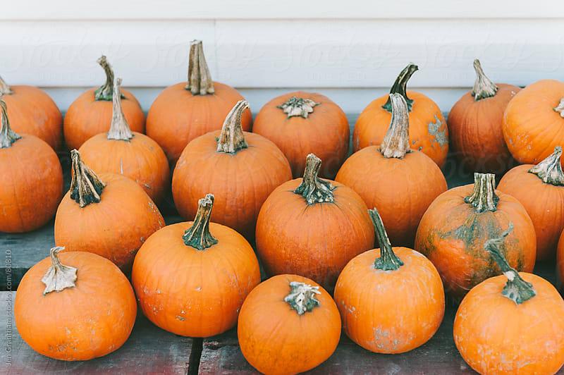 Pumpkins by Jen Grantham for Stocksy United