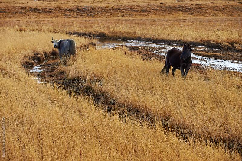 beautiful horse on autumn grassland by cuiyan Liu for Stocksy United