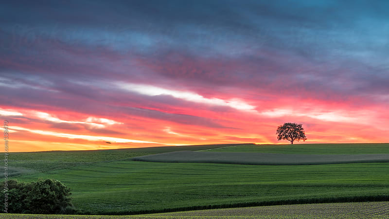Lonely Tree with Sunset Colors by Andreas Wonisch for Stocksy United