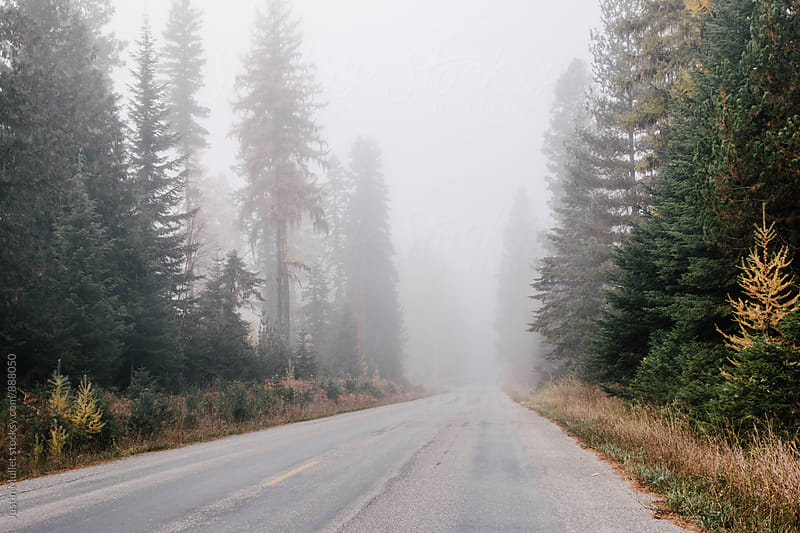 Rural country road during fall in Washington.  by Justin Mullet for Stocksy United