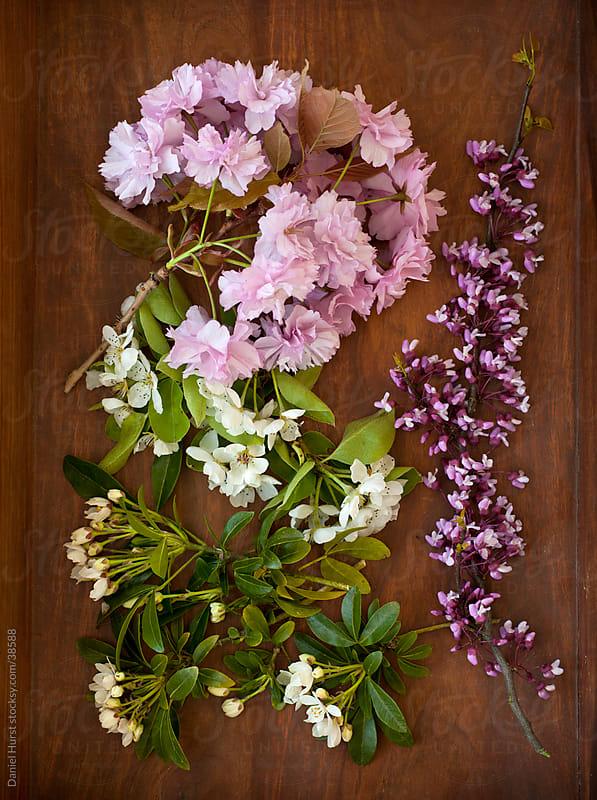 Spring flower blossoms on wooden background by Daniel Hurst for Stocksy United