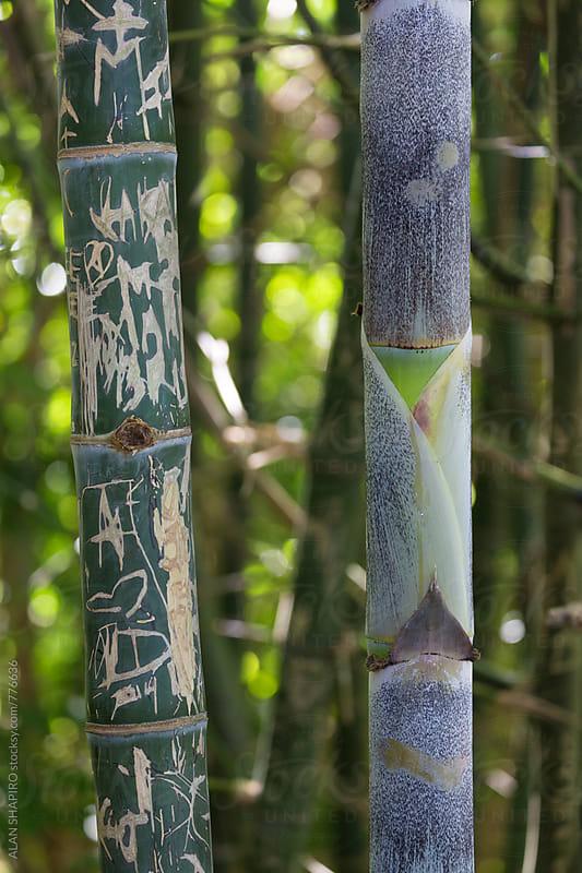 bamboo w grafitti by ALAN SHAPIRO for Stocksy United