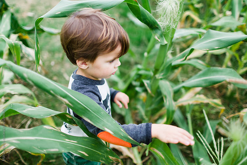 child in corn field by Maria Manco for Stocksy United