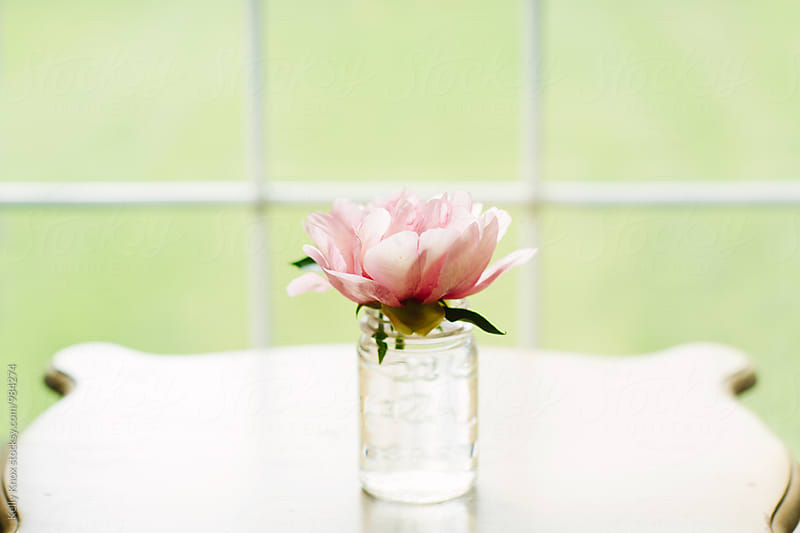 peony in a jar on a table in front of a window by Kelly Knox for Stocksy United