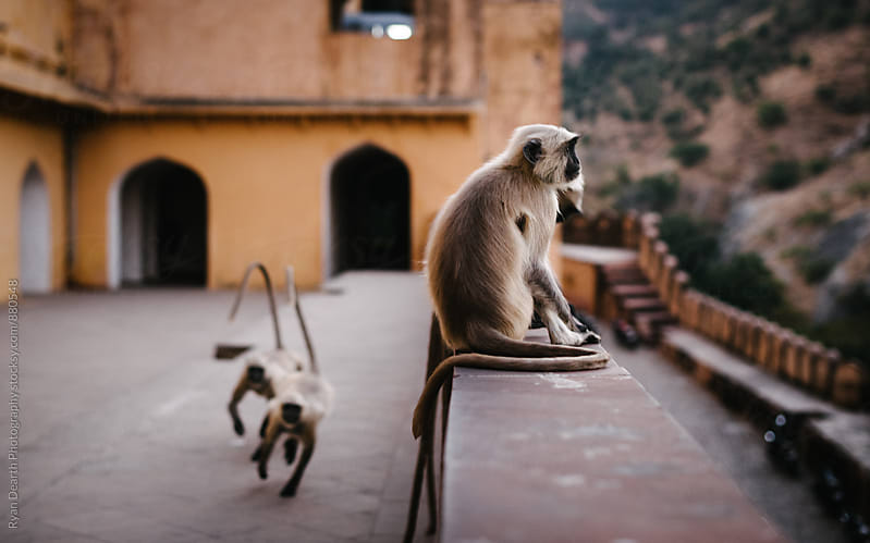 Perched Monkeys by Ryan Dearth Photography for Stocksy United