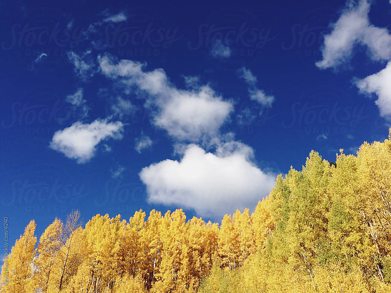 Colorful Fall Aspen Forest by Kevin Russ for Stocksy United