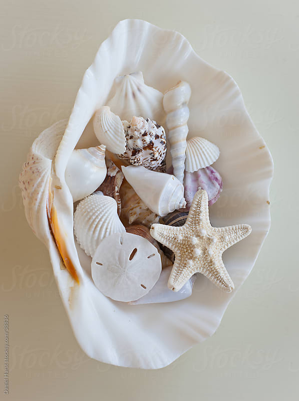 Collection of shells in giant clam shell by Daniel Hurst for Stocksy United