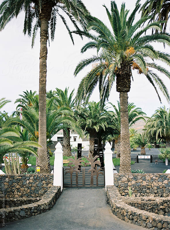 Lanzarote by Yann AUDIC for Stocksy United