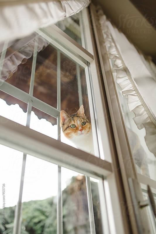 Cat perching on grates and peering inside the house through window by Laura Stolfi for Stocksy United