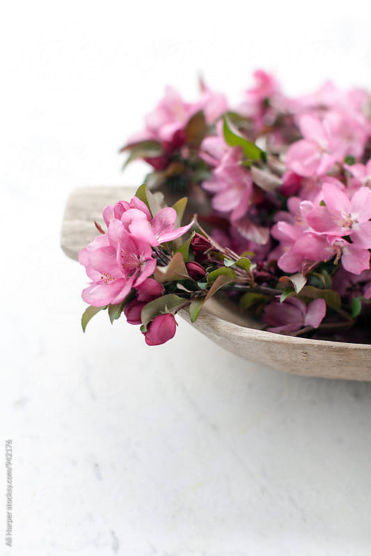 Cherry blossoms in bowl by Ali Harper for Stocksy United