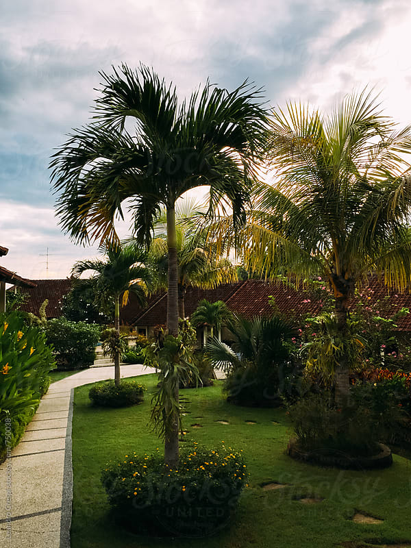 A tropical garden by Leandro Crespi for Stocksy United