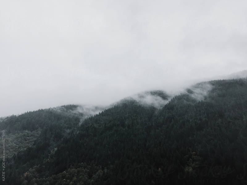 cloudy oregon forest by KATIE + JOE for Stocksy United