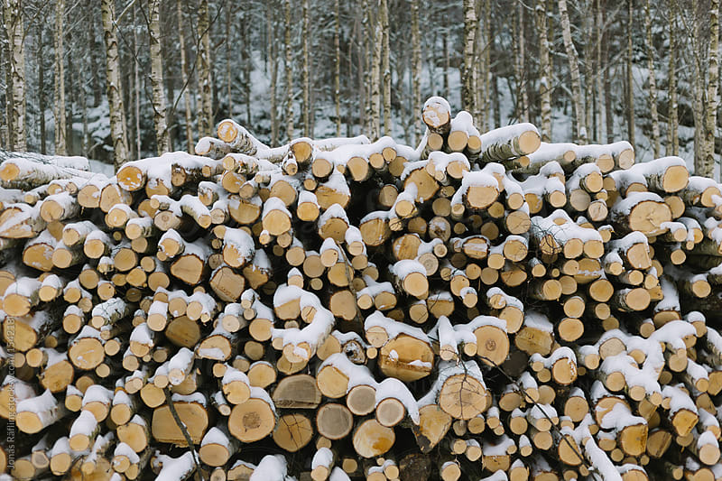 Stacked birch wood in snow by Jonas Räfling for Stocksy United