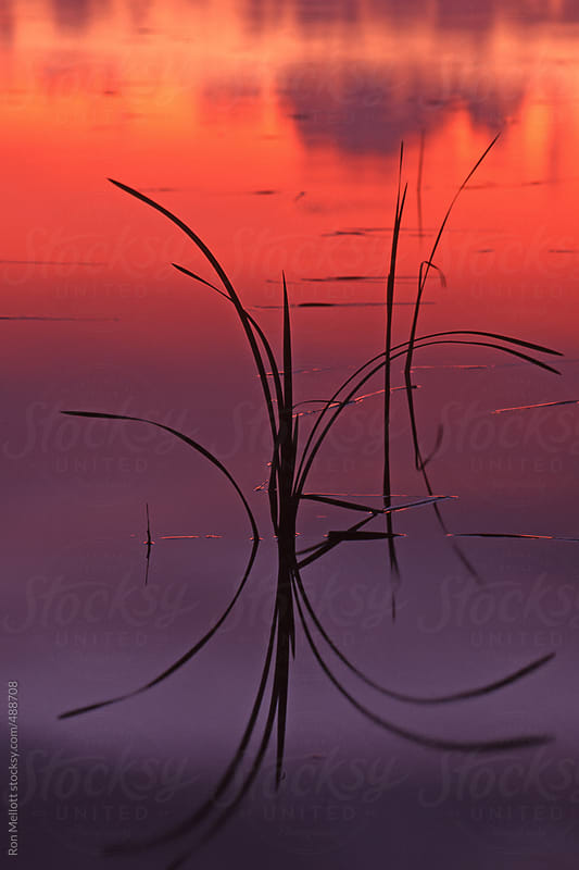long time exposure of grasses silhouetted in pond at sunset eastern Washington Palouse Prairie by Ron Mellott for Stocksy United