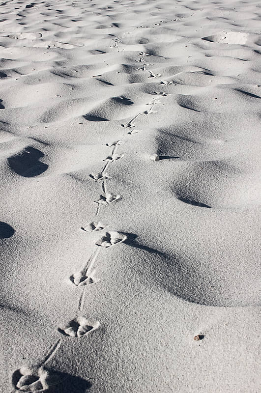 Birds foot steps in the sand by Lior + Lone for Stocksy United