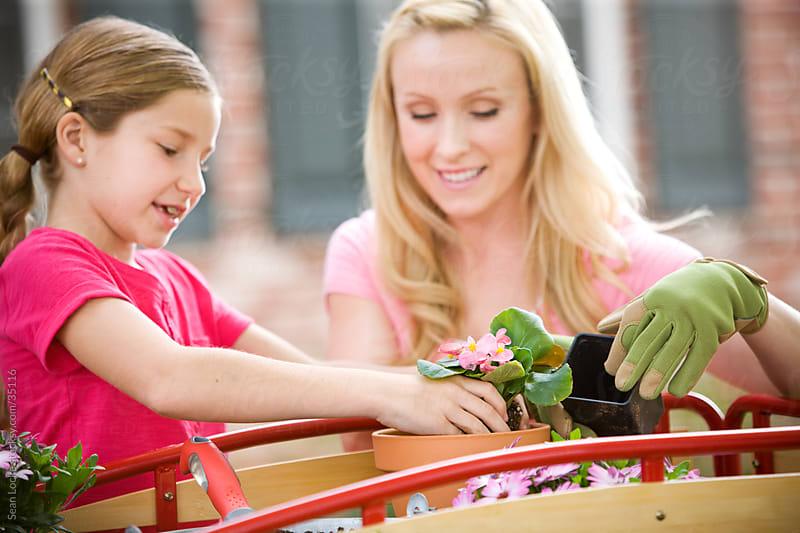 Planting: Focus on Begonias by Sean Locke for Stocksy United