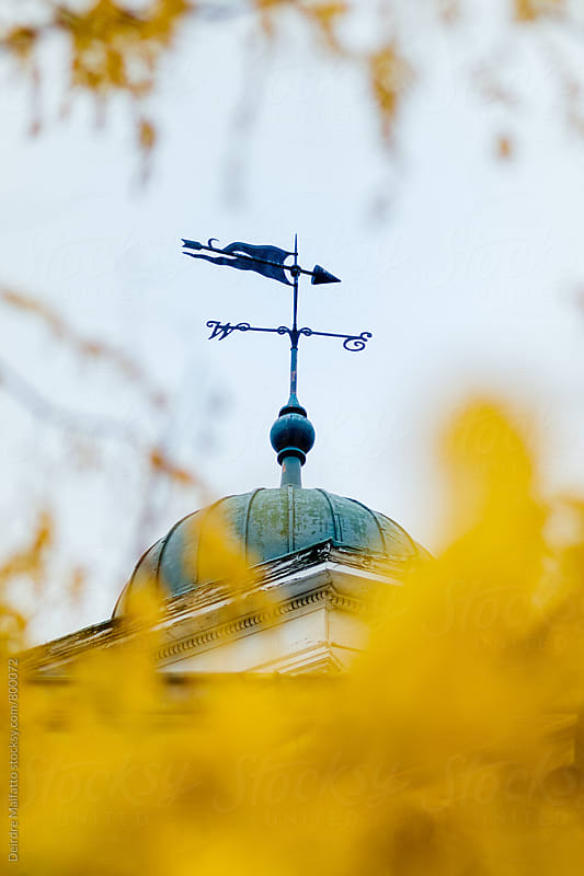 Weather vane and autumn leaves by Deirdre Malfatto for Stocksy United