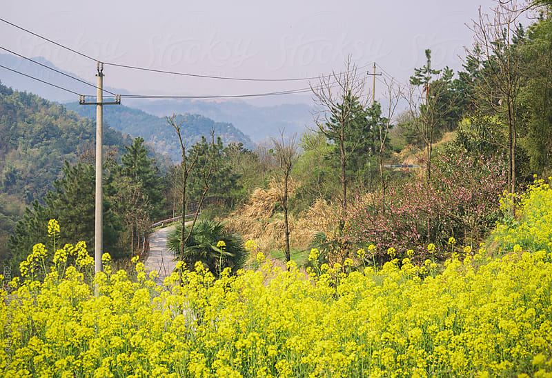Field path,Zhejiang,China by Miss Rein for Stocksy United