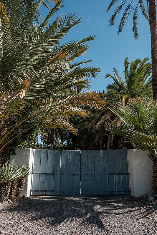 A blue gate surrounded by palm trees by Riley J.B. for Stocksy United
