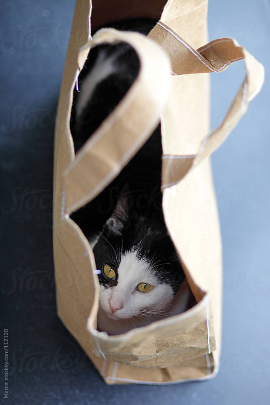 Young cat hiding in a brown paper handbag. by Marcel for Stocksy United
