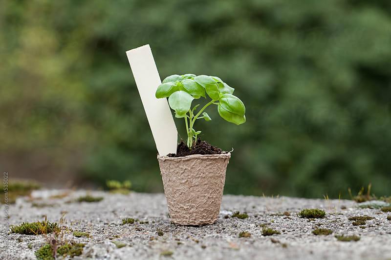 Seedlings growing by Alberto Bogo for Stocksy United