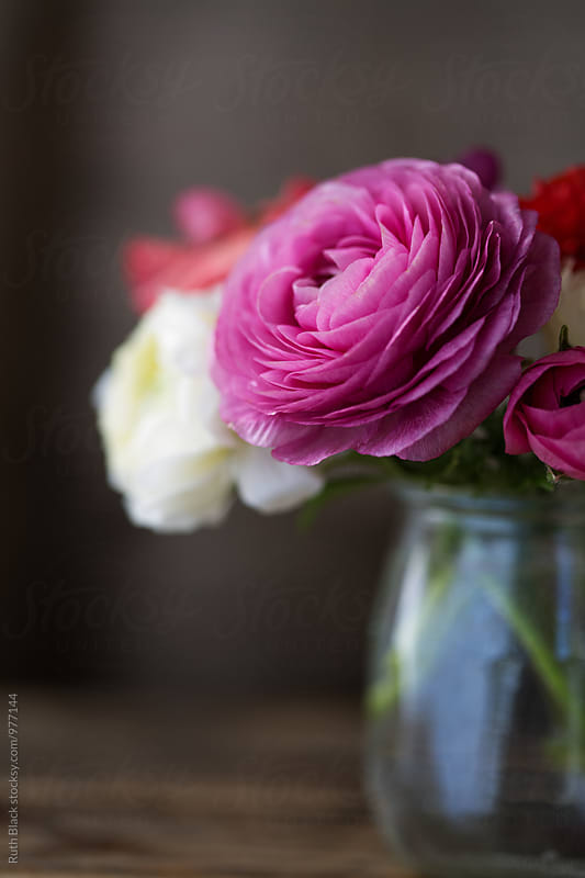 Ranunculus in a jar by Ruth Black for Stocksy United