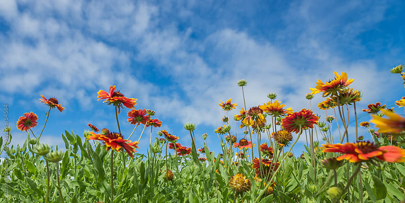 Wild Flowers Reaching to the Sky by suzanne clements for Stocksy United