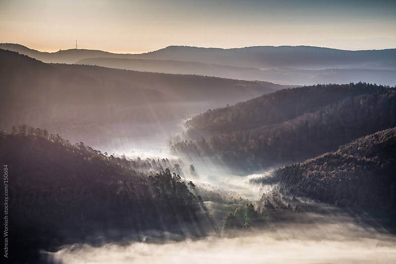 Morning Sunrays over Foggy Forest Hills by Andreas Wonisch for Stocksy United