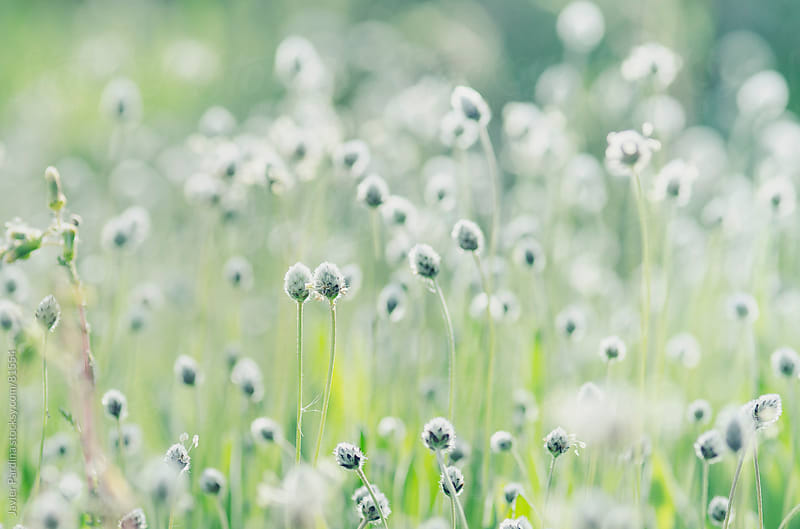the first flowering plants of spring by Javier Pardina for Stocksy United