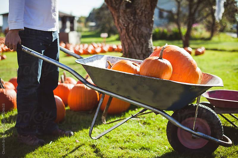 Man pushes wheelbarrow of pumpkins. by Cherish Bryck for Stocksy United