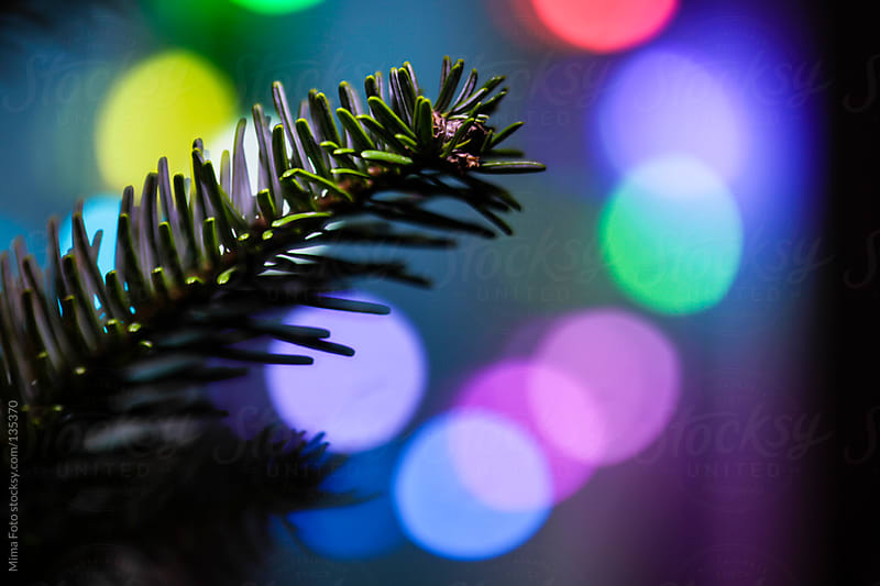 Christmas Tree Branch and color lighting by Mima Foto for Stocksy United