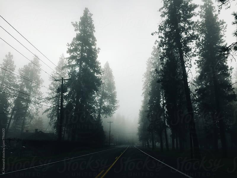 Trees in the Fog. by K. Howard for Stocksy United