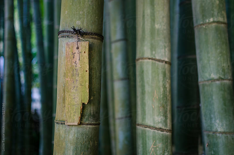 Japanese Sign Hanging In A Bamboo Forest by Leslie Taylor for Stocksy United
