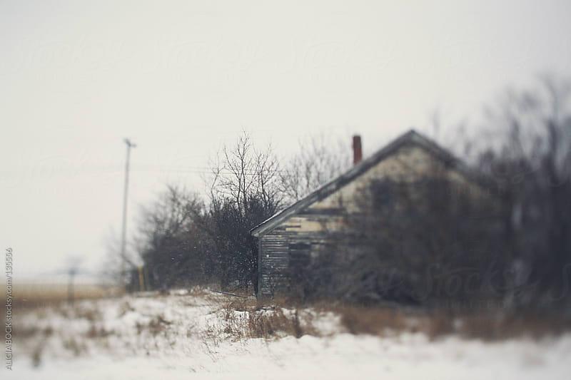 The Hidden Barn by ALICIA BOCK for Stocksy United