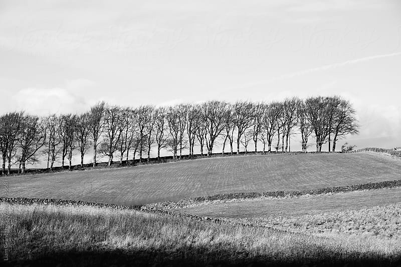 Trees on the horizon of a hill. Derbyshire, UK. by Liam Grant for Stocksy United
