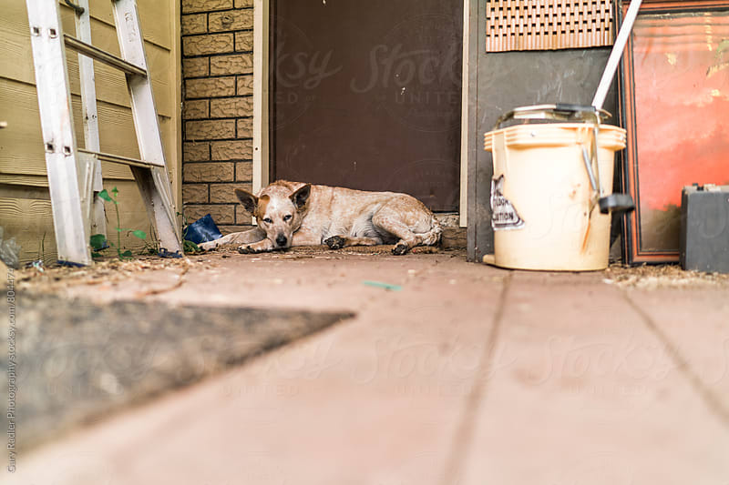 Working Dog on Back Porch Doormat by Gary Radler Photography for Stocksy United