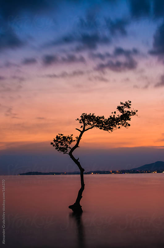 lonely tree in water by Alexander Grabchilev for Stocksy United