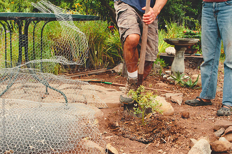 Gardening at Home by Jayme Burrows for Stocksy United