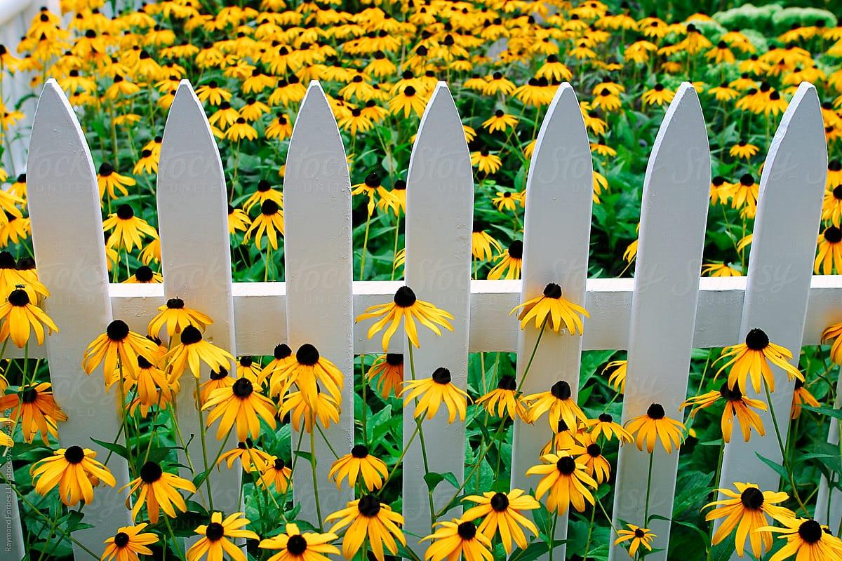 White picket fence with flowers stocksy united white picket fence with flowers by raymond forbes llc for stocksy united mightylinksfo