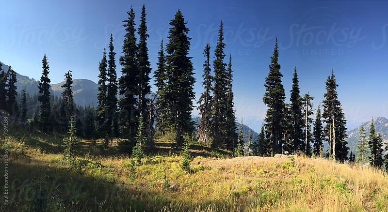 View of expansive mountains and old growth forests in the Central Cascades by Paul Edmondson for Stocksy United