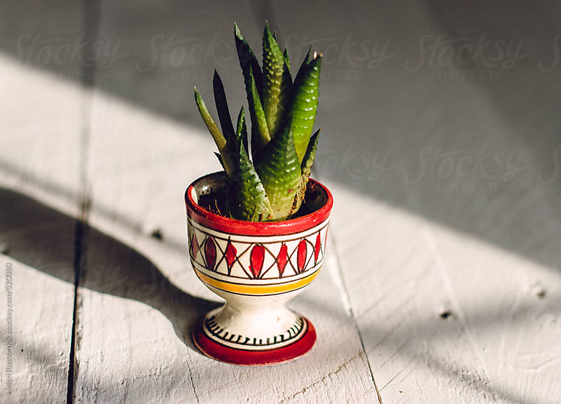 A tiny succulent plant in a hand-painted egg cup on a sunny table. by Helen Rushbrook for Stocksy United