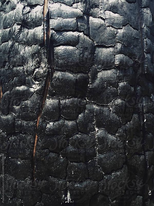 Close up of fire damaged evergreen tree, Cascades, WA, USA by Paul Edmondson for Stocksy United