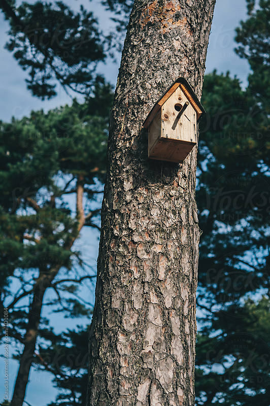 Birdhouse on a Tree by Claudia Lommel for Stocksy United