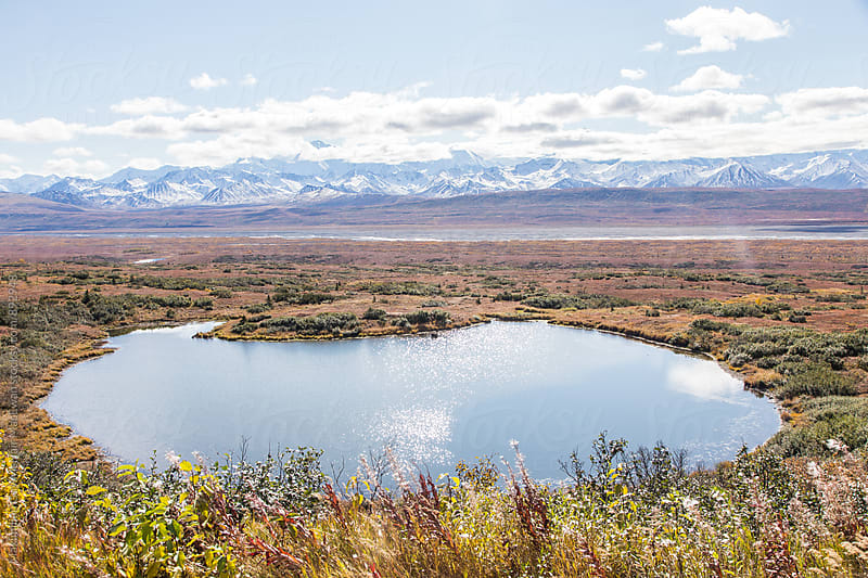 A lake amid the vast alaskan landscape by Maximilian Guy McNair MacEwan for Stocksy United