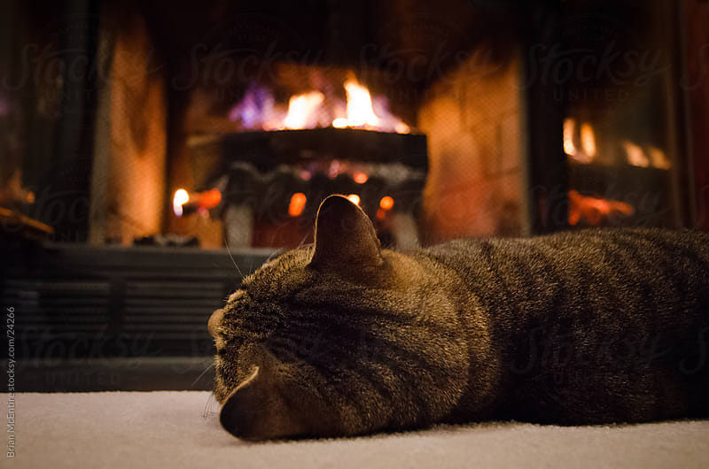Tabby Cat Soaking up Heat by The Fireplace by Brian McEntire for Stocksy United