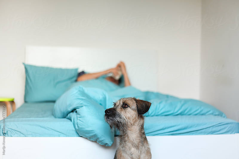 Cute dog sitting next to the bed - horizontal by Marija Kovac for Stocksy United