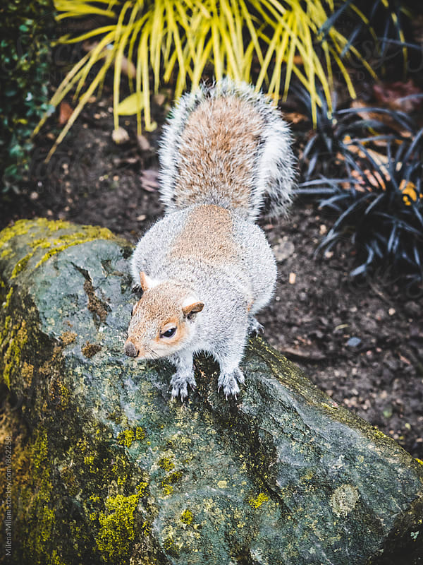 Squirrel by Milena Milani for Stocksy United