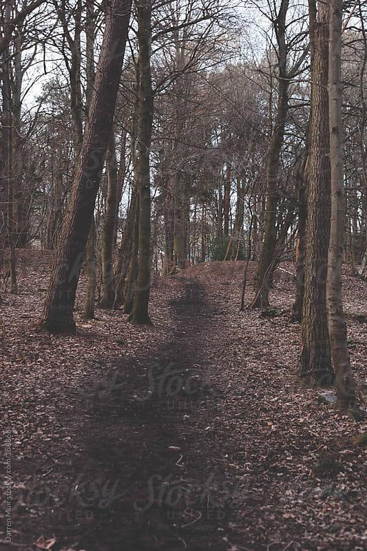 Woodland trail. by Darren Muir for Stocksy United