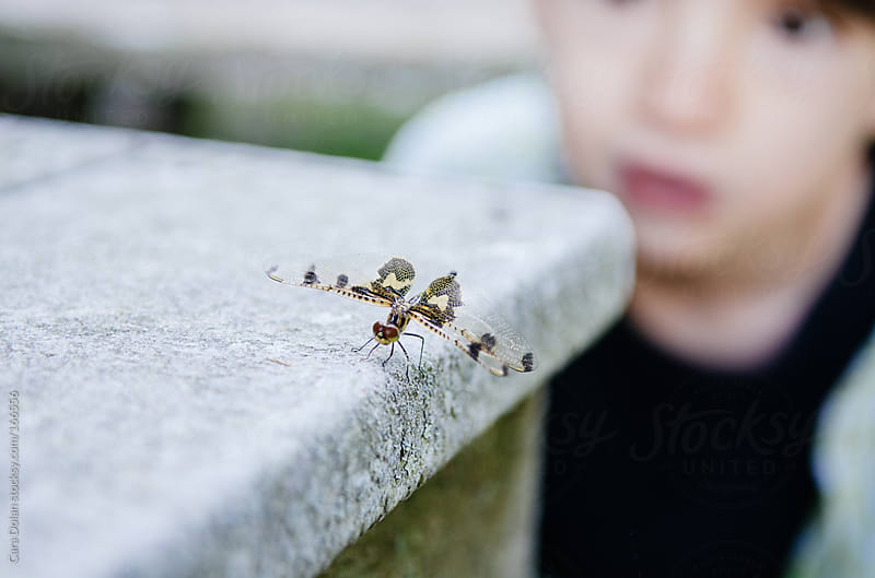 Boy looks at a dragon fly by Cara Dolan for Stocksy United